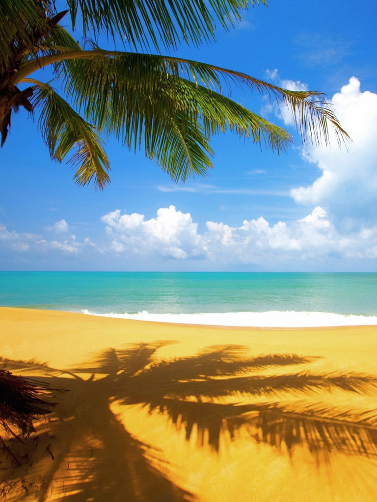 Wallpaper Dunk For Android Tropical Palm Tree On Beach iPad Wallpaper 768x1024