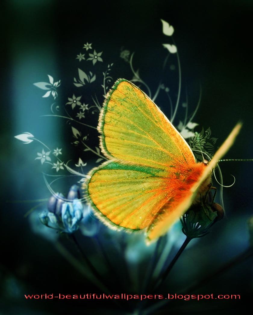Beautiful Wallpapers Beautiful Butterflies Wallpaper 840x1048