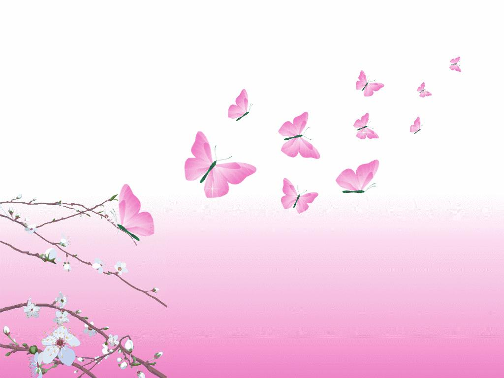 yorkshire rose images Pink Butterflies HD wallpaper and background 1024x768