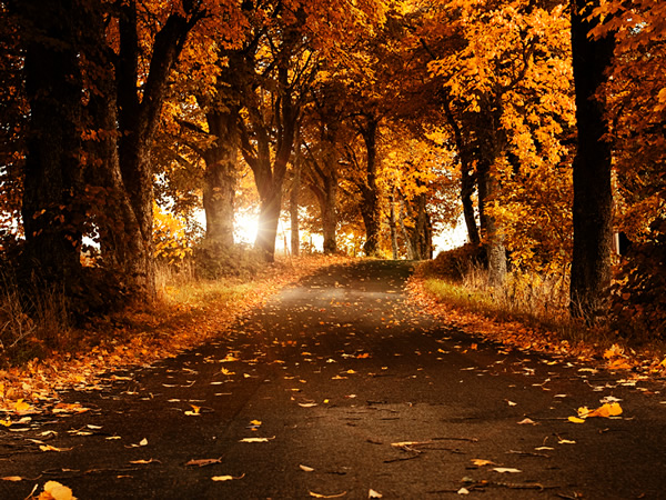 wallpapers cute wallpapers latest wallpapers most beautiful natural 600x450