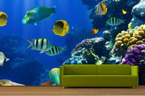 Coral Reef Wallpaper 501x334