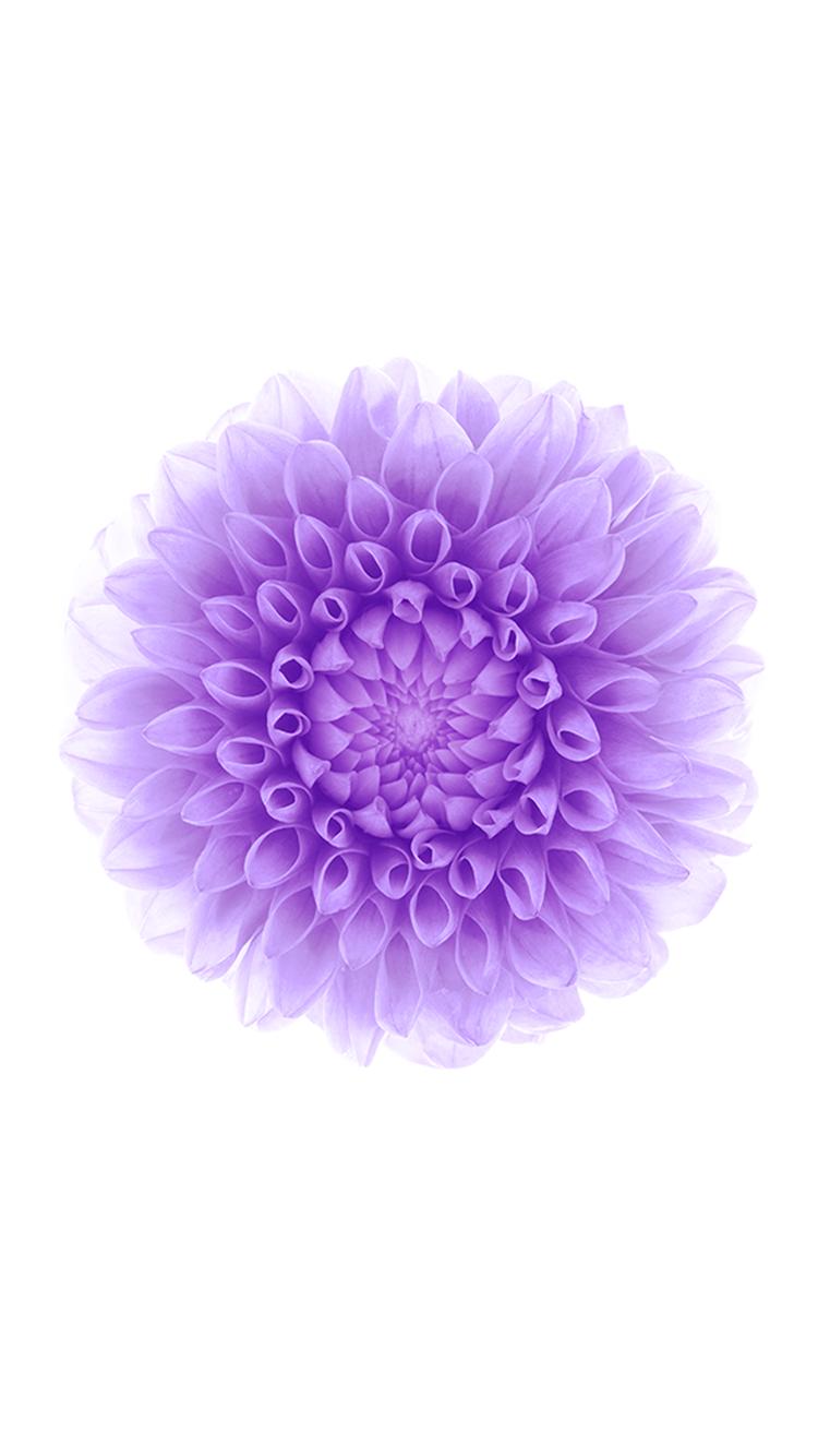 Purple Flower Background 750x1334