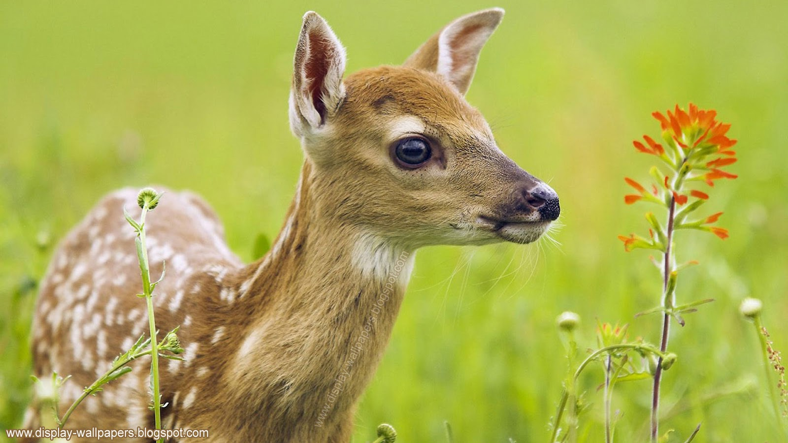 Baby animal background wallpaper wallpapersafari - Animal pictures for desktop backgrounds ...