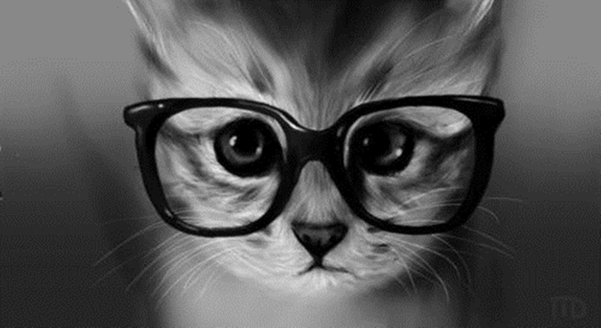 Funny Cat Glasses Wallpaper Wallpaper WallpaperLepi 1920x1048