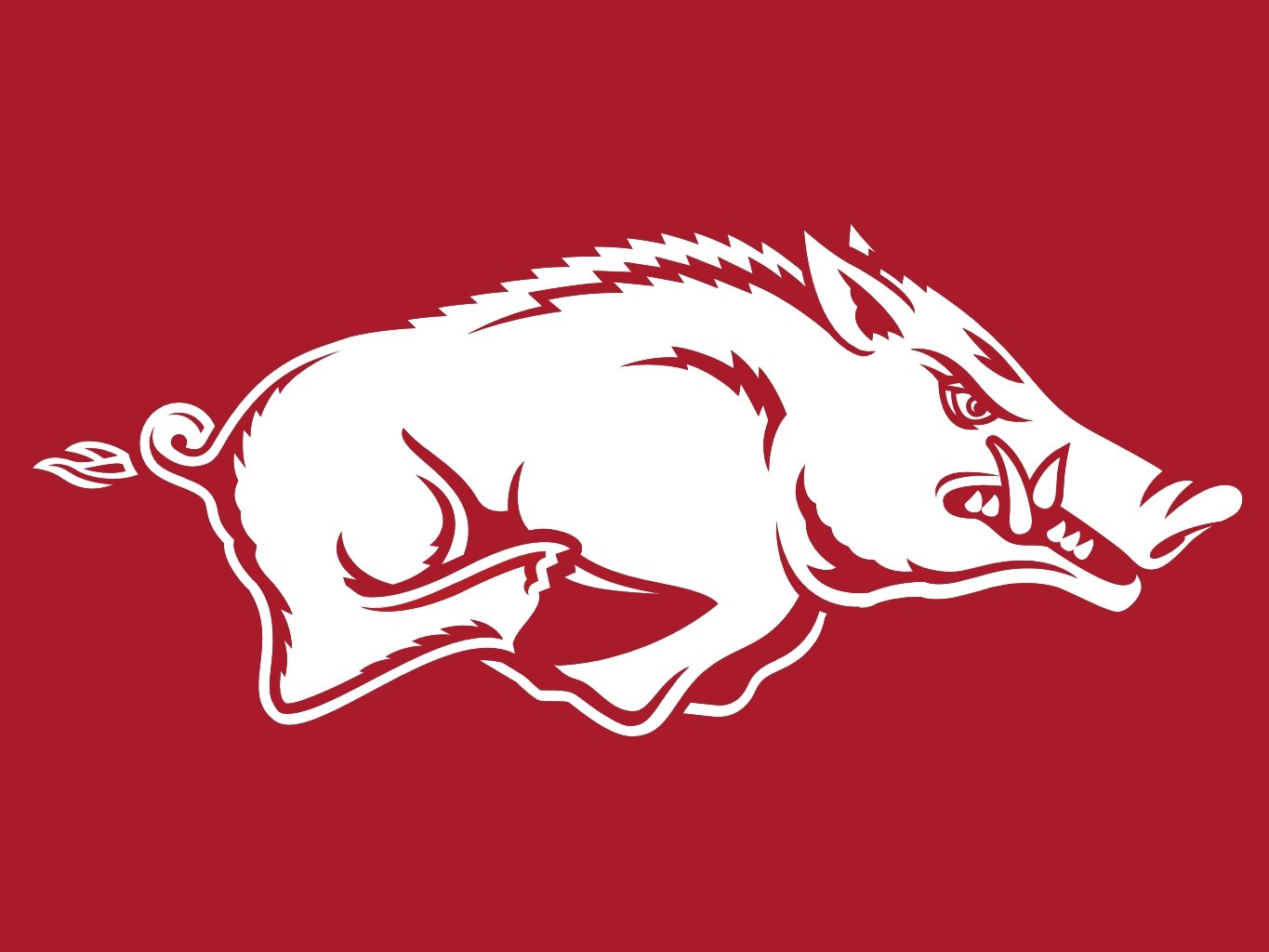razorback wallpaper iphone 5