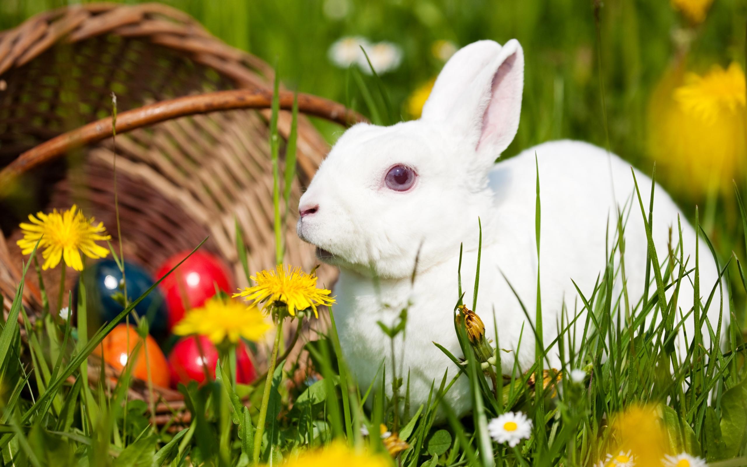 white rabbit wallpaper - wallpapersafari
