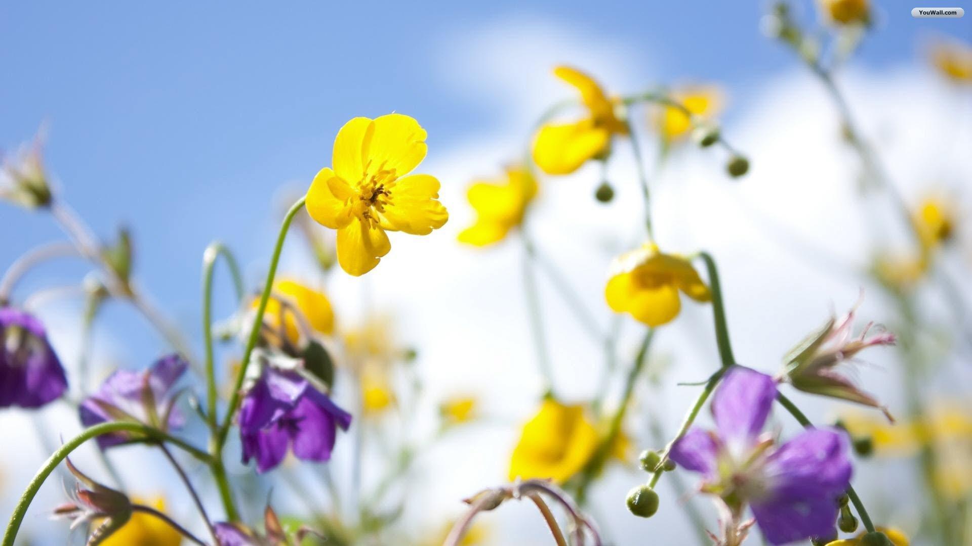 Wallpaper Spring Flowers 1920x1080