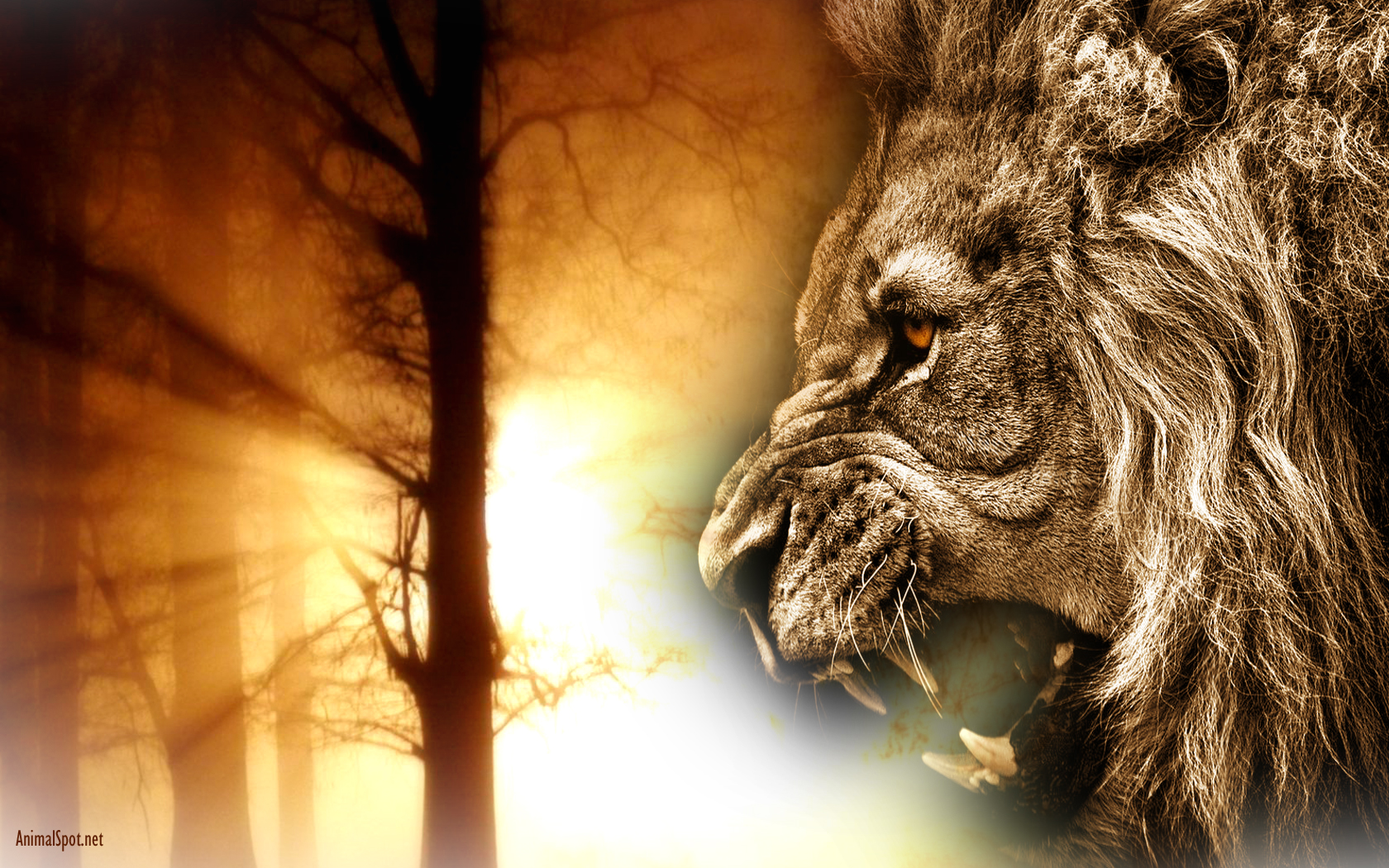 Lion Face Wallpaper   Viewing Gallery 1680x1050