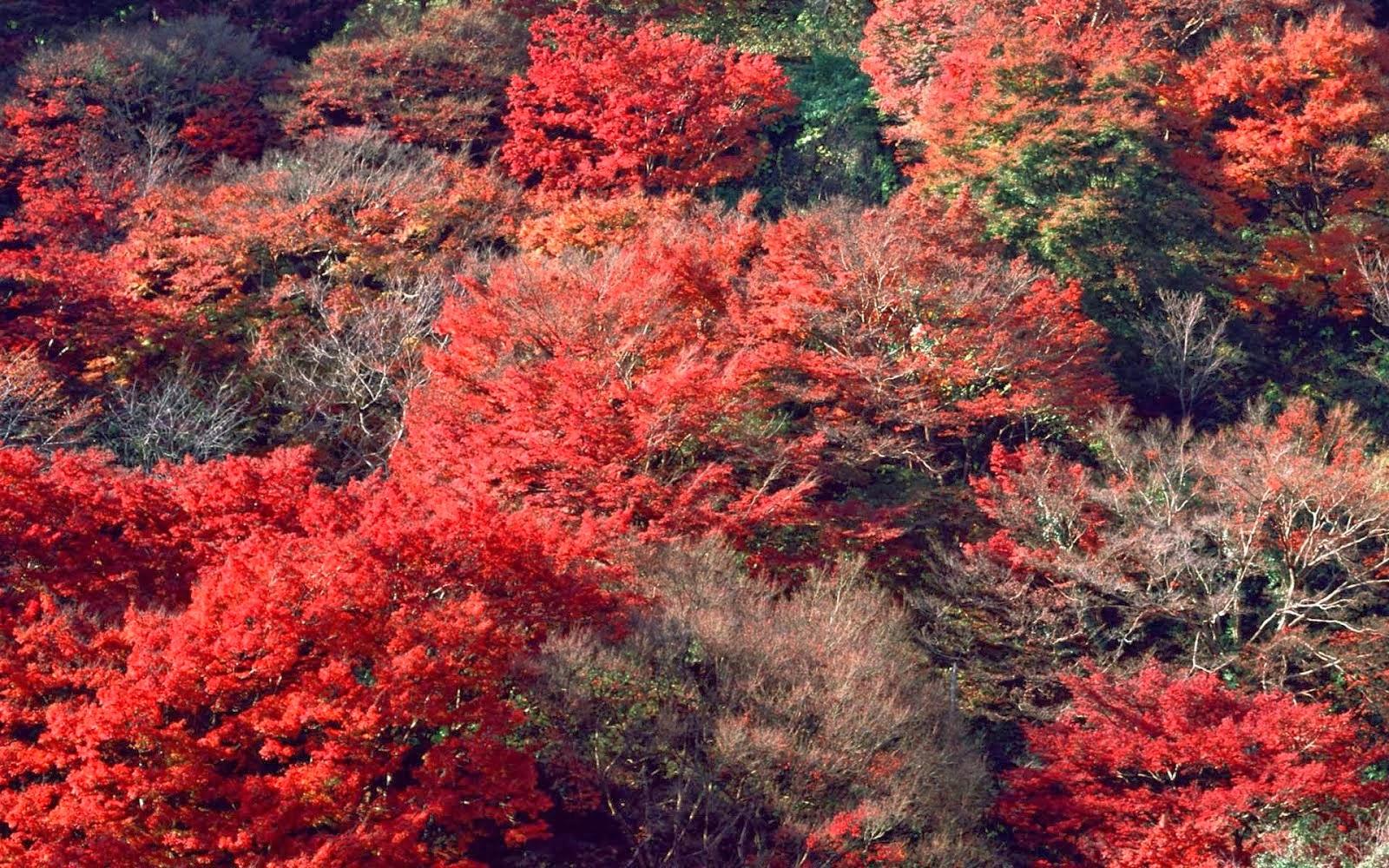 autumn nature hd wallpaper 1080p autumn nature hd wallpaper 1080p 1600x1000