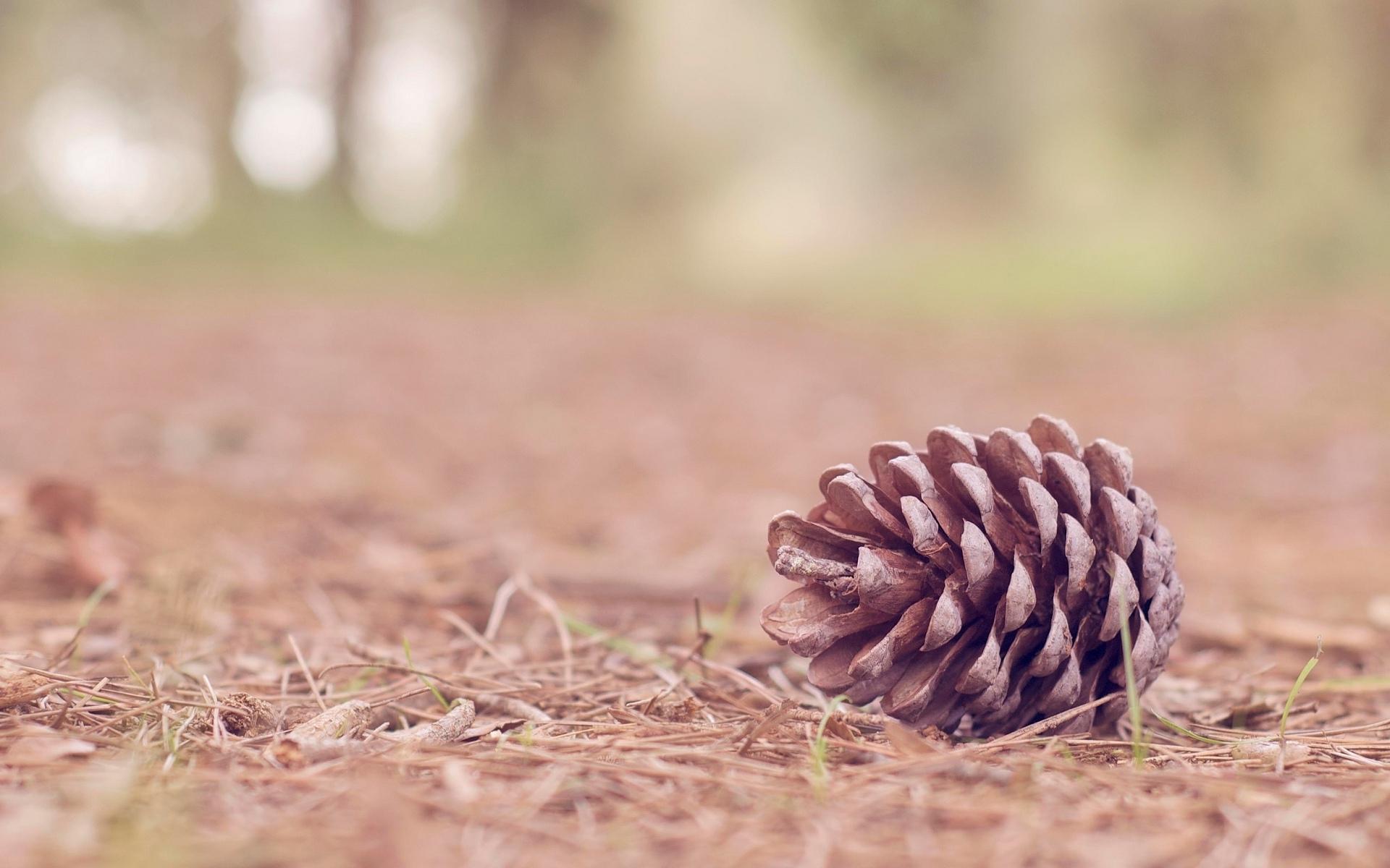 Pine cone ornaments fir branch beads wallpaper x