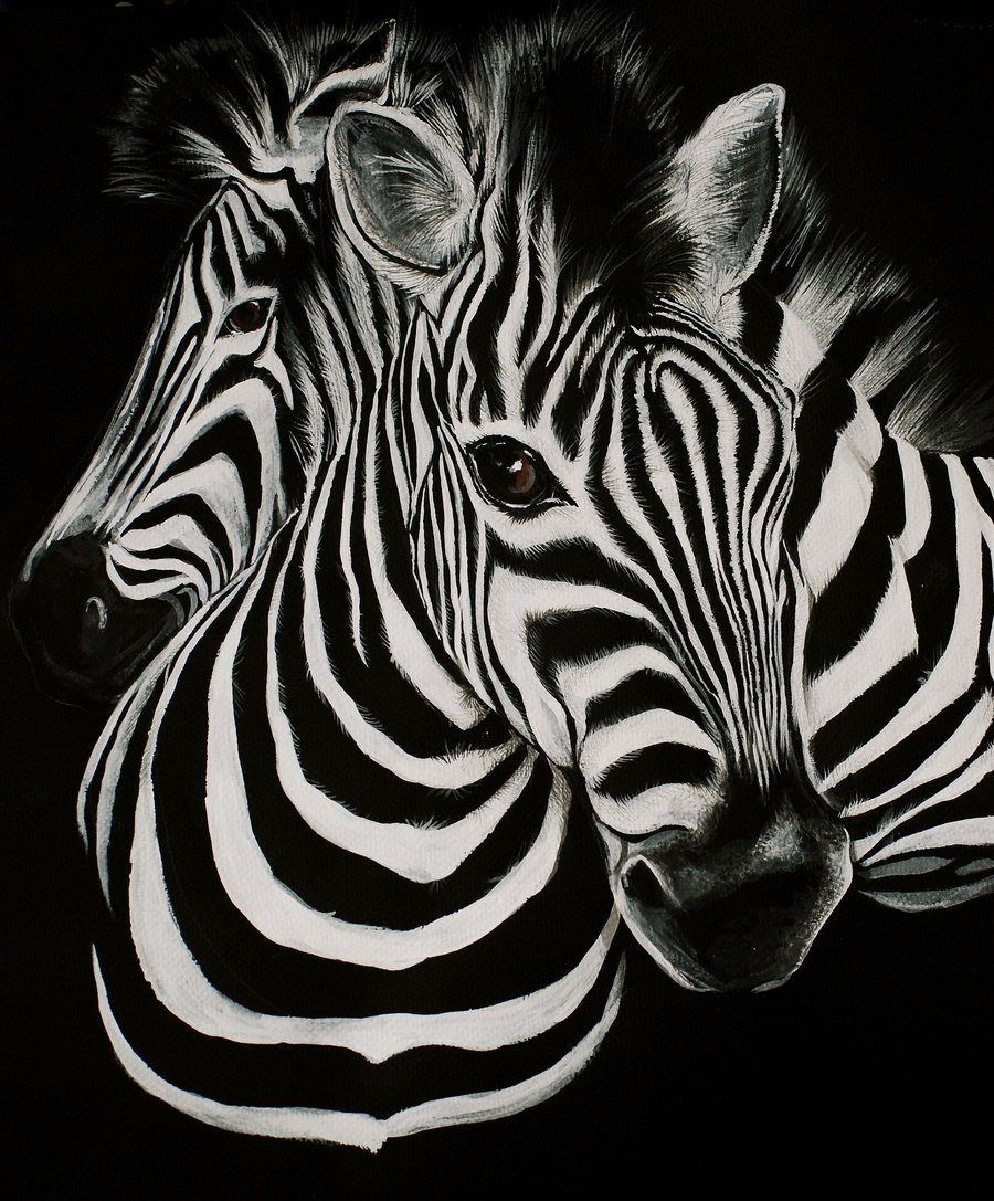 HD Zebra Background Cool Wallpaper Wallpapers HDR   Clip Art Library 900x1087