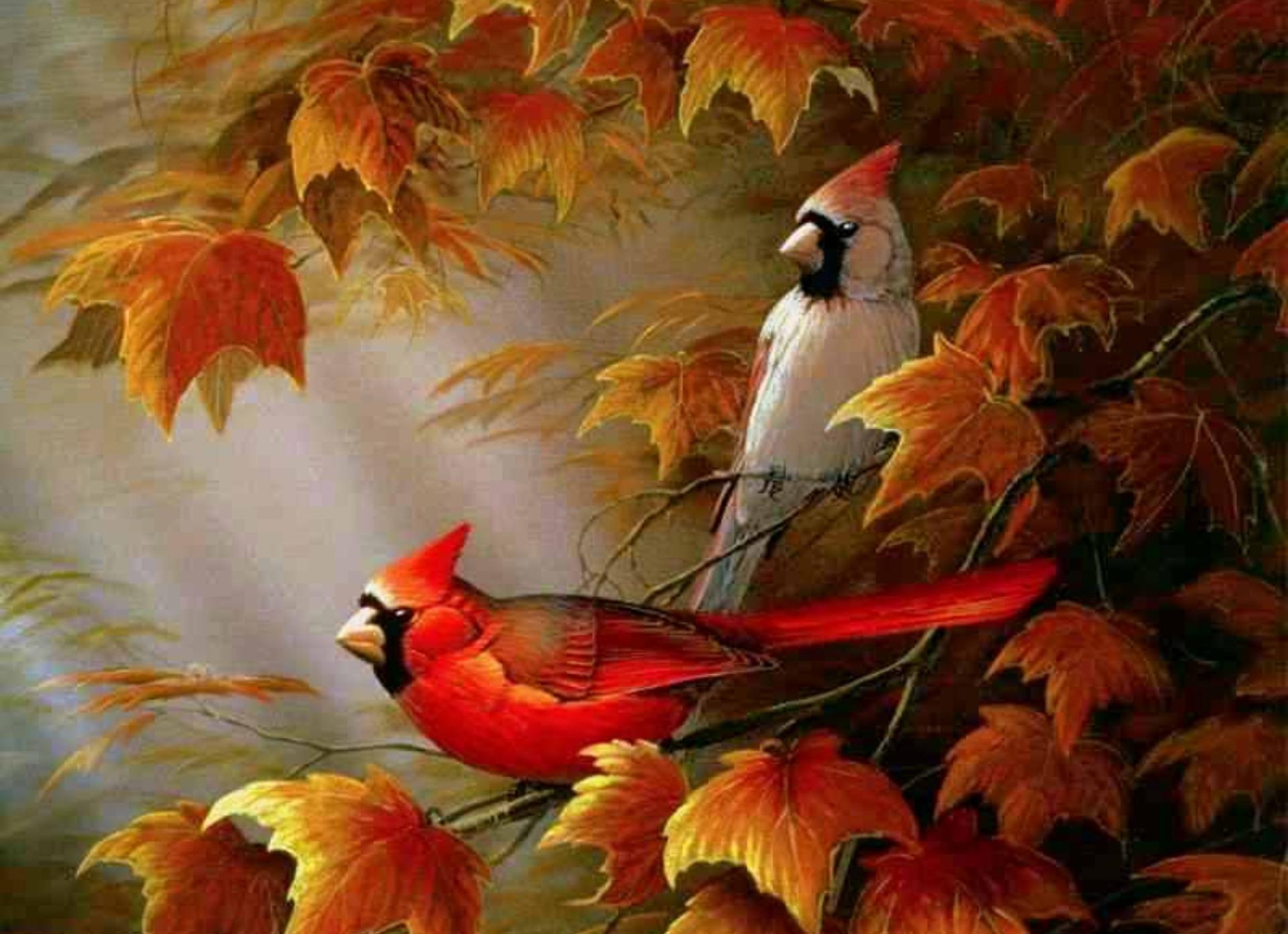 Cardinals birds   Autumn Cardinals Wallpapers   HD Wallpapers 95116 1920x1392