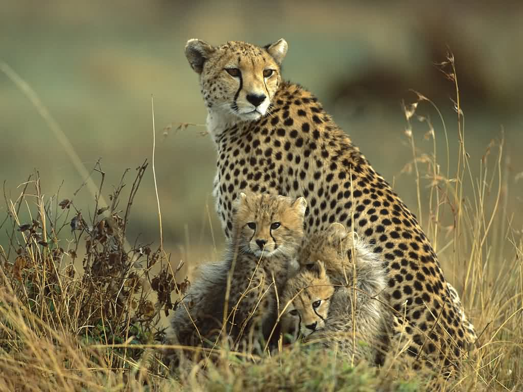 Top 15 Most Beautiful Wildlife Wallpapers 1024x768