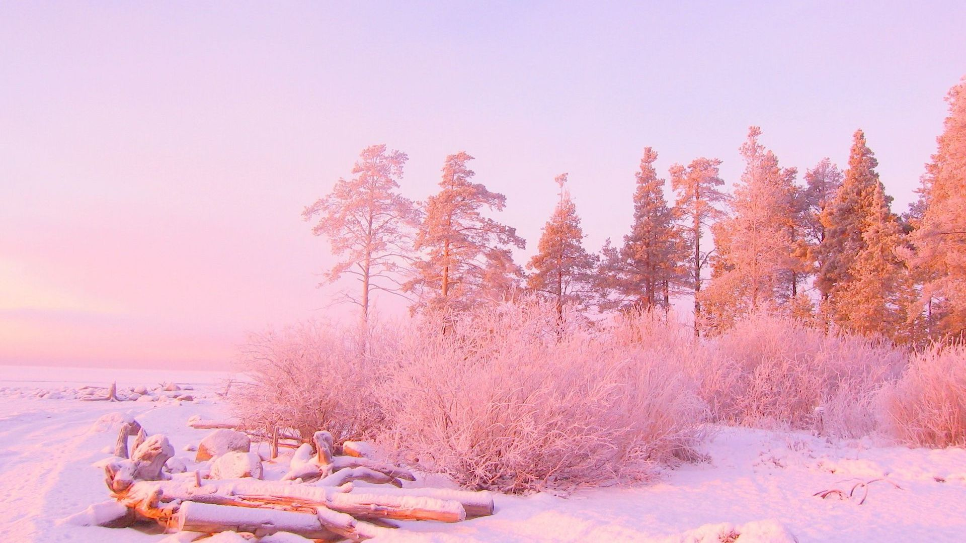 Pink sunset light over snowy forest Wallpaper 10228 1920x1080