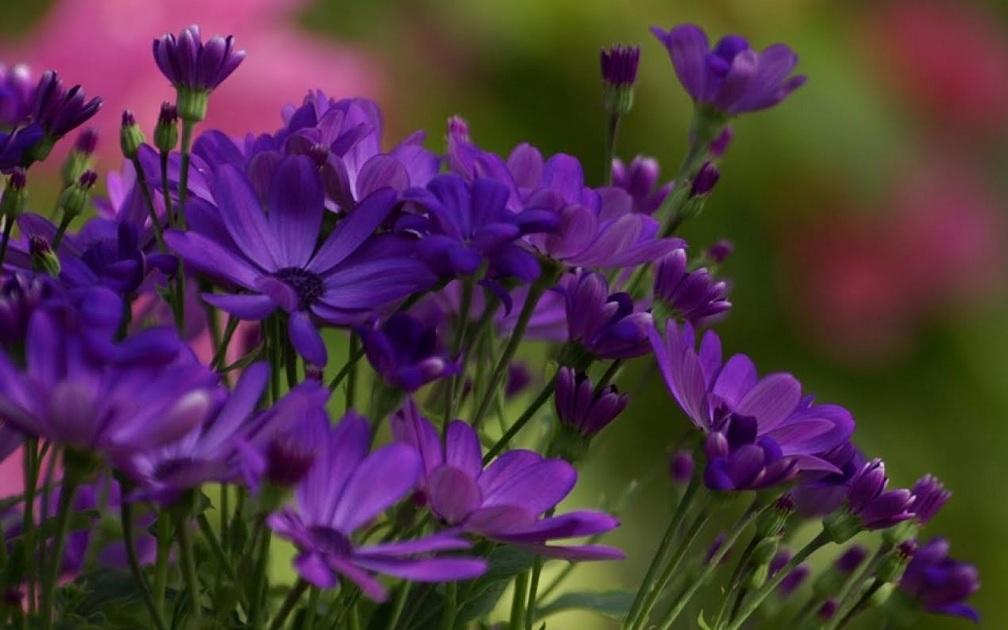 Violet Flowers Wallpaper - WallpaperSafari