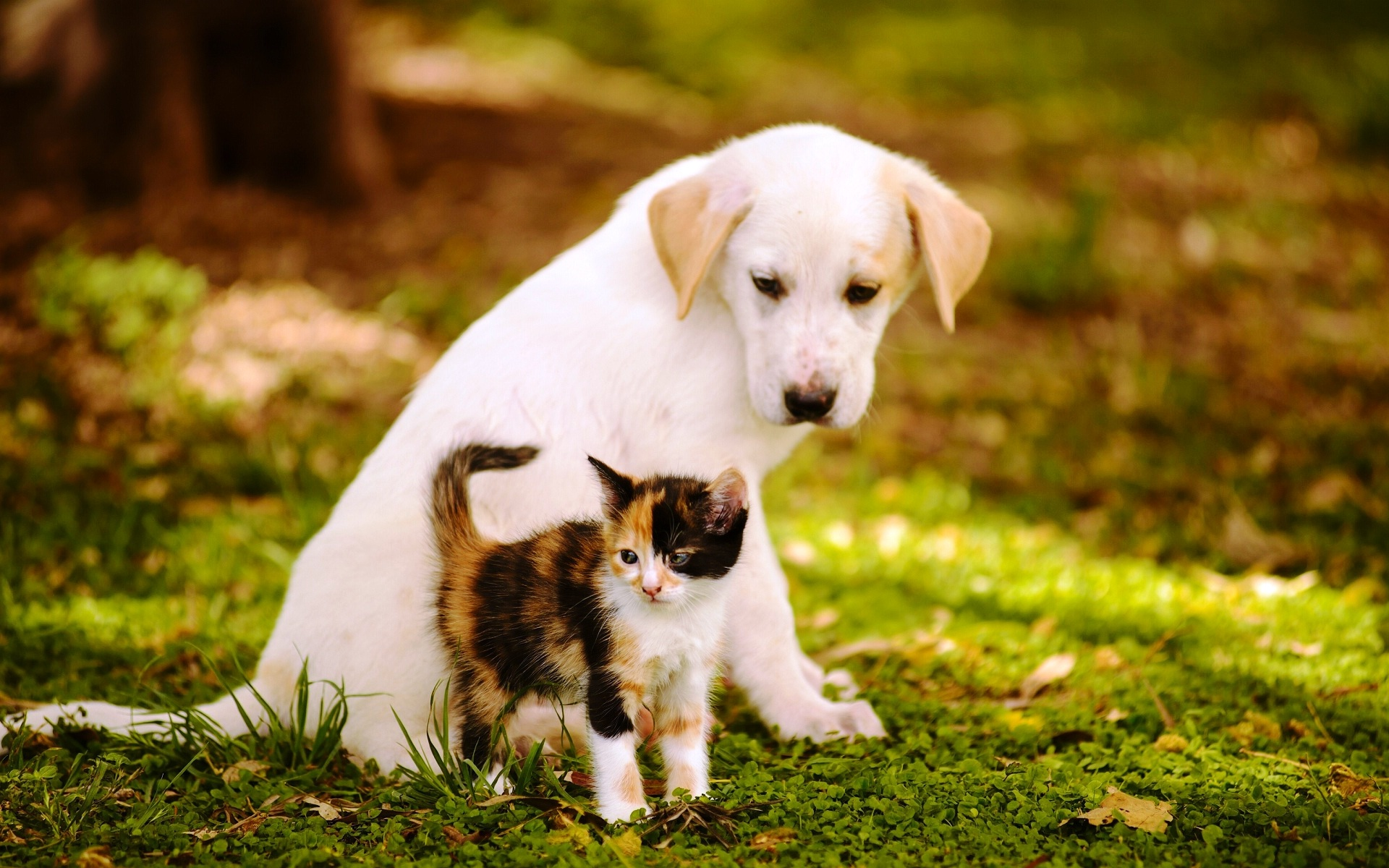 Cute Pictures Of Baby Cats And Dogs