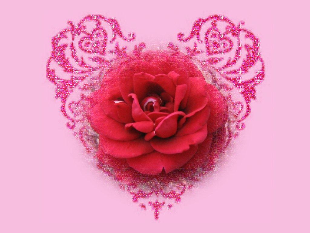rose wallpapers rose wallpaper beauty rose wallpaper red rose 1024x768