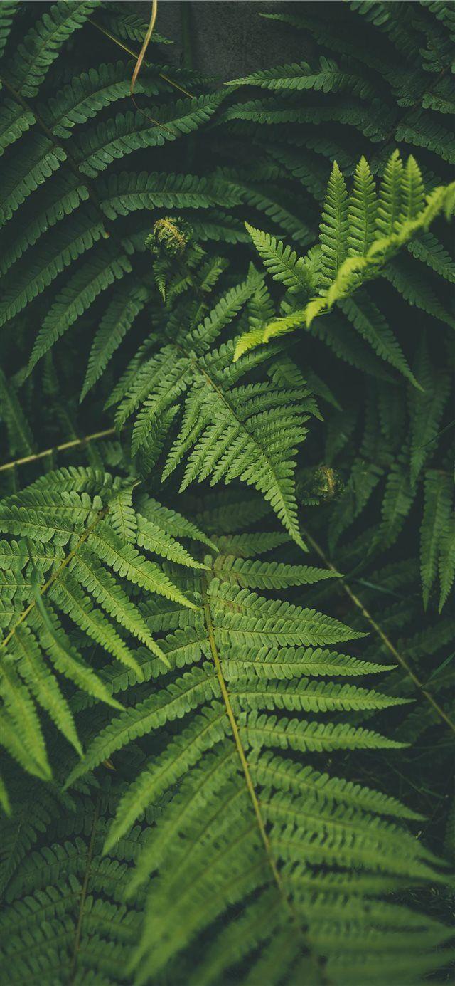 outdoor iPhone X wallpaper Ipad wallpaper Green leaf wallpaper 640x1385