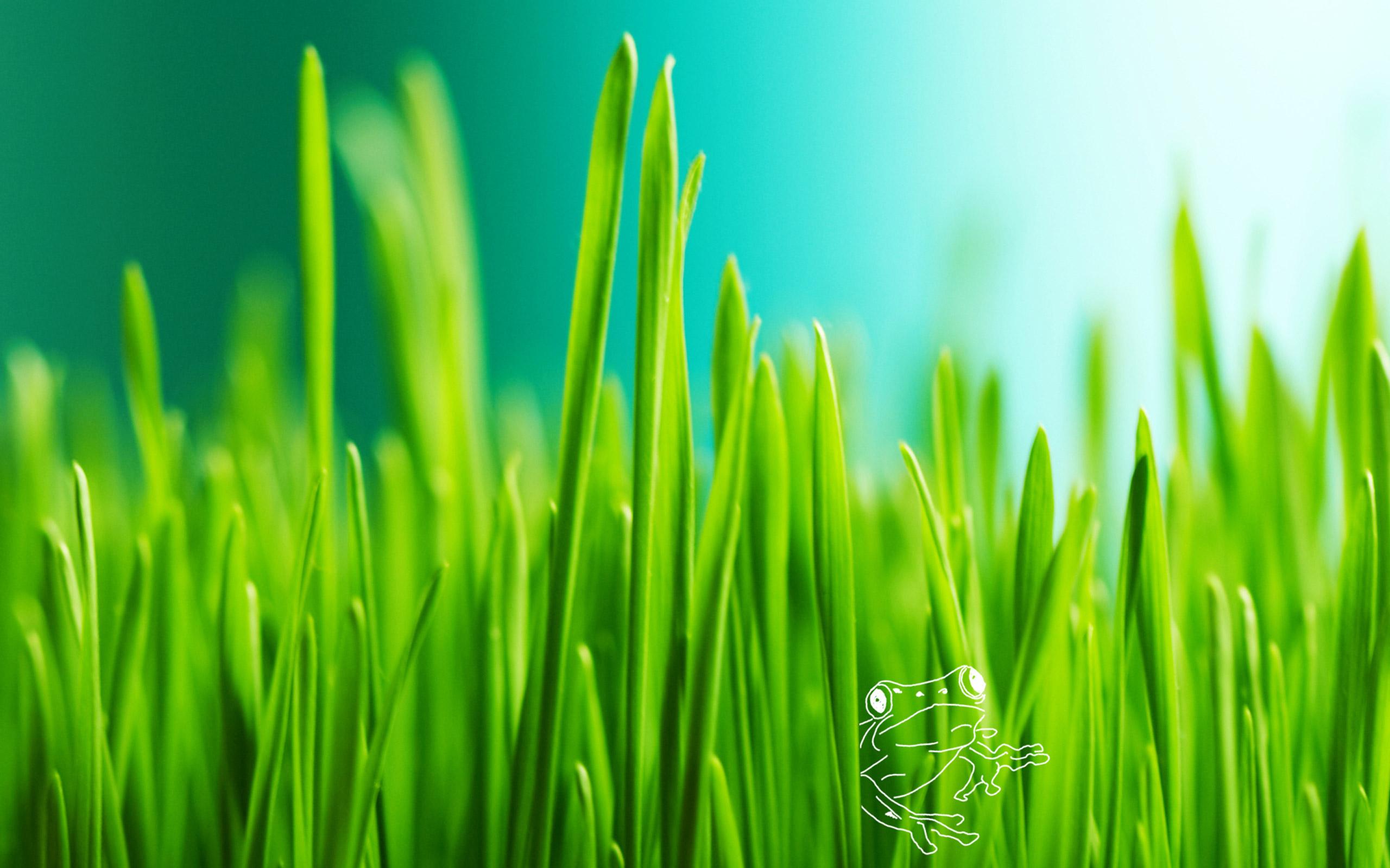 Desktop Grass HD Wallpapers 2560x1600