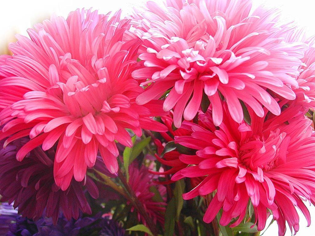 Cute Pretty Flowers Wallpapers