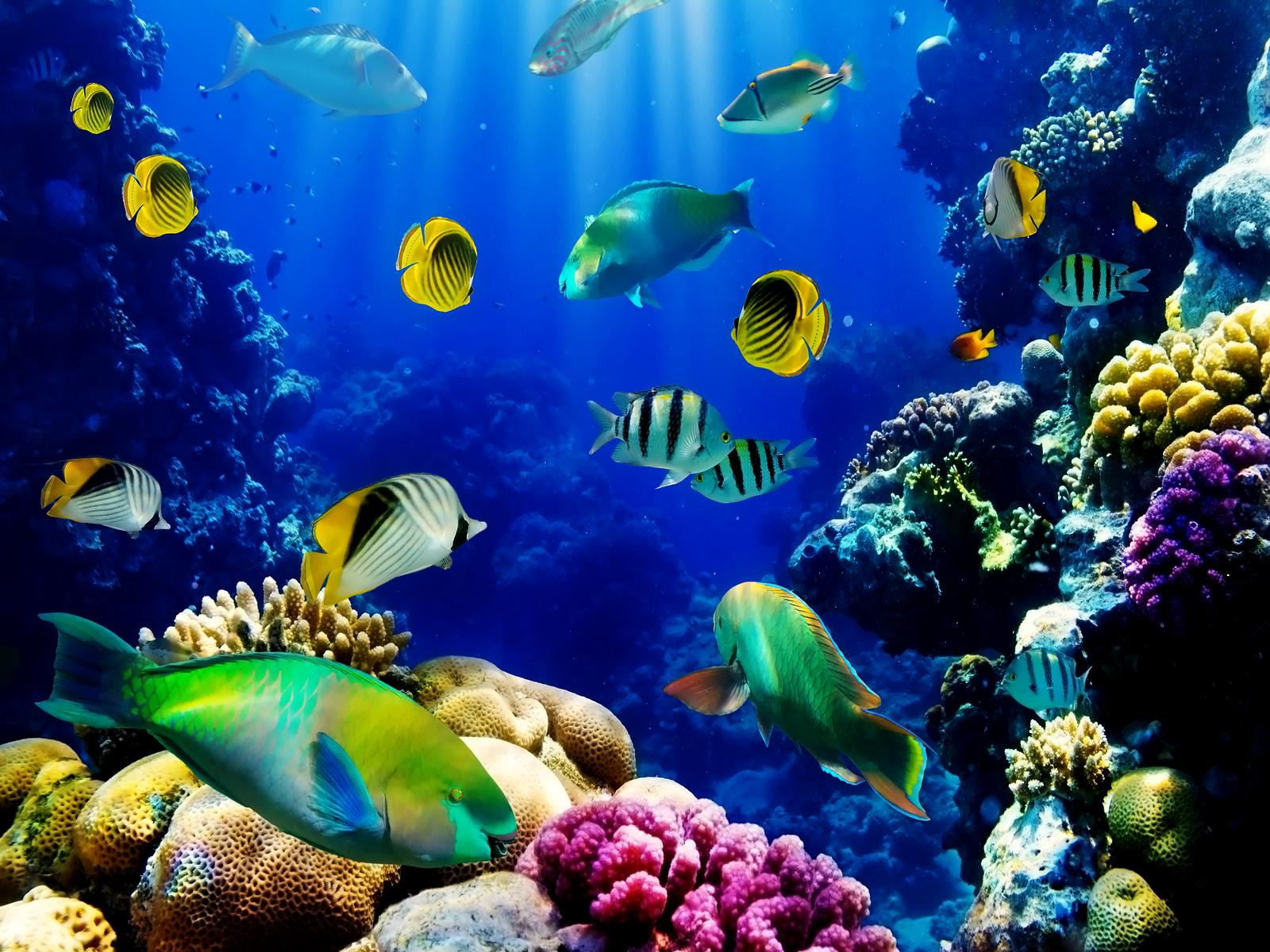3d Live Fish Wallpaper Fish Tank Live Wallpaper 1600x1200