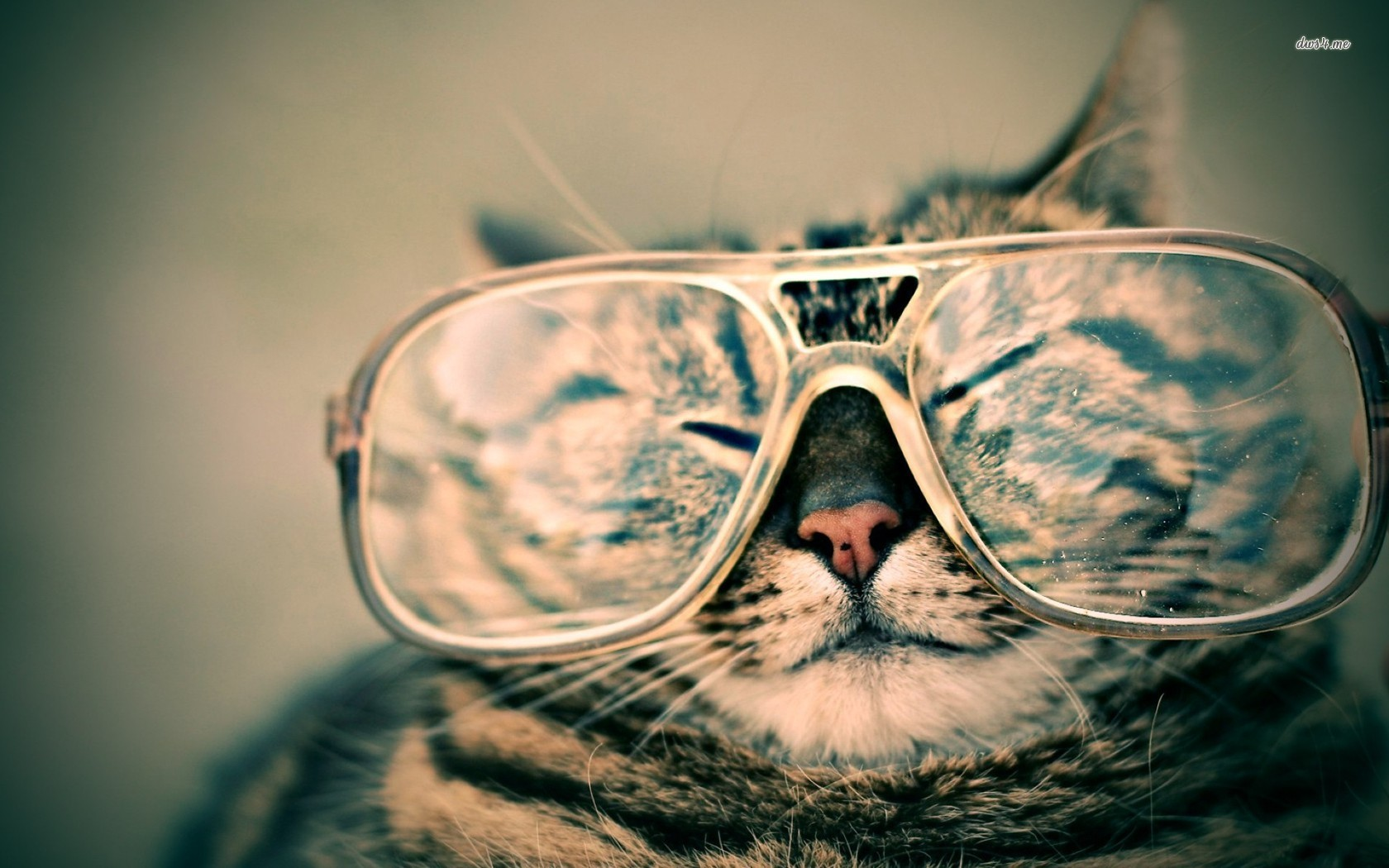 Cat Wearing Sunglasses Wallpaper Check out these cats 1680x1050