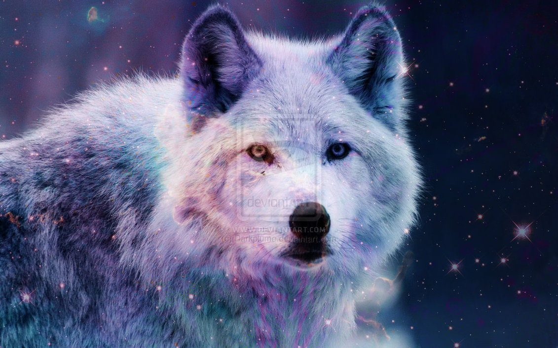 Galaxy Hipster Wolf Download