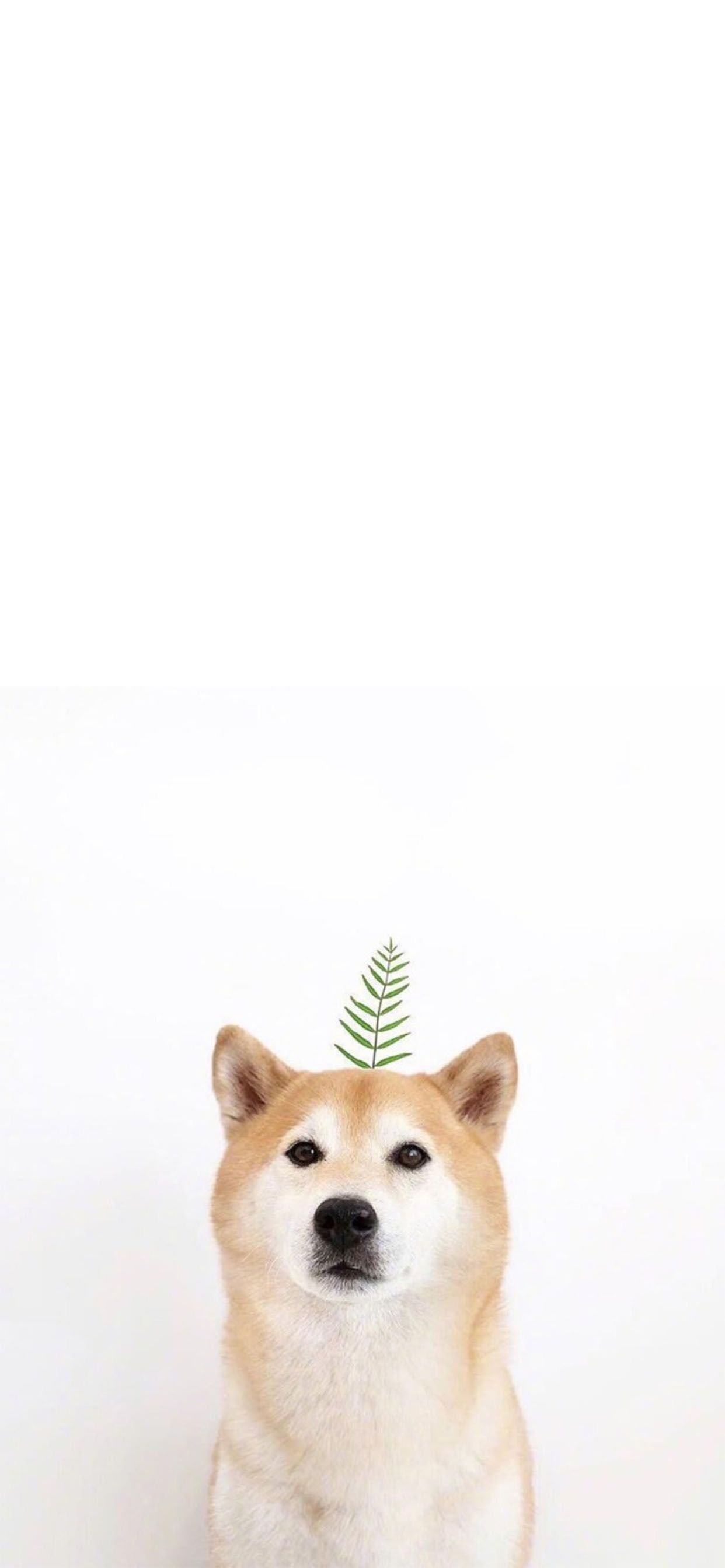 Pin by Nicole Andrea Gene on DOG PHONE WALLPAPERS Cute animals 1242x2688