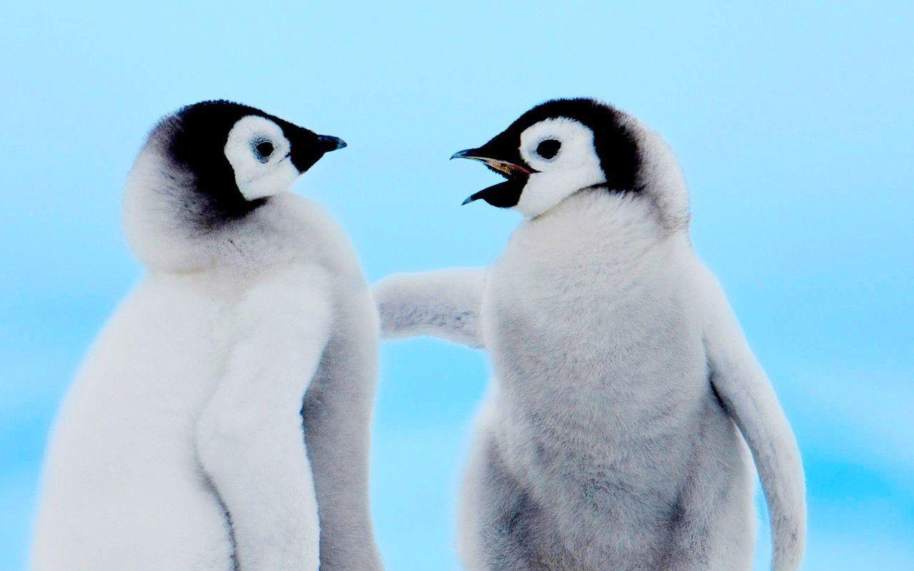 Cute Penguin Backgrounds 1280x800