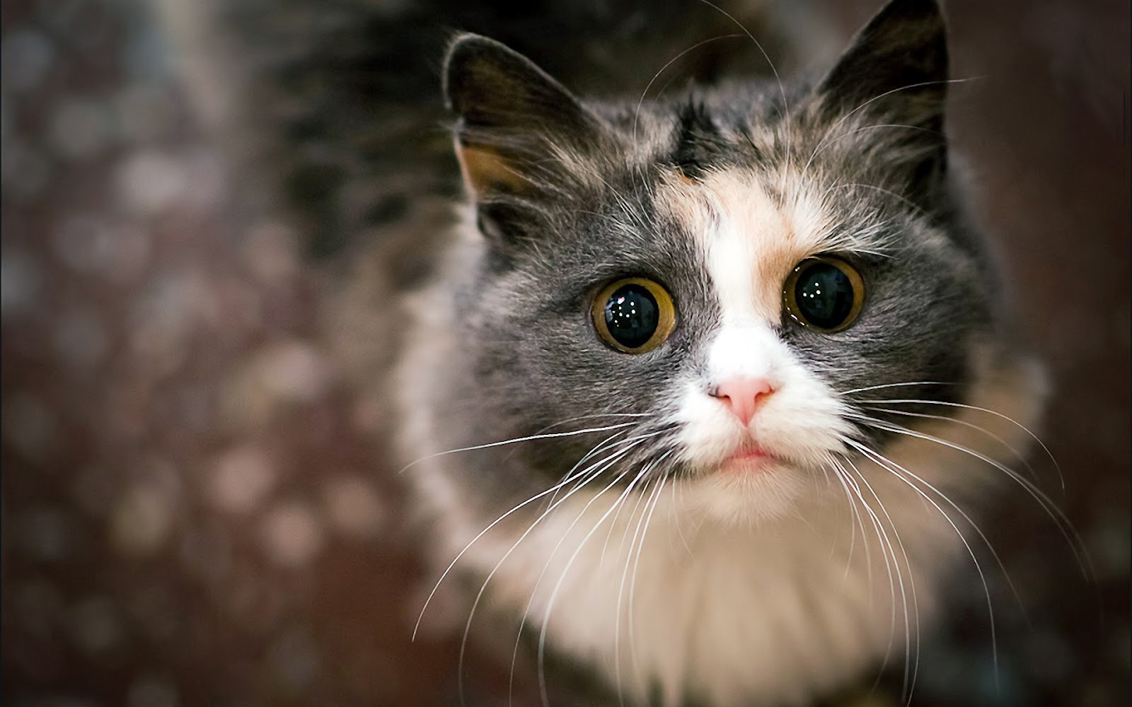 Just a Lovely Cat Hd 1080p Wallpaper The Wallpaper Database 1600x1000
