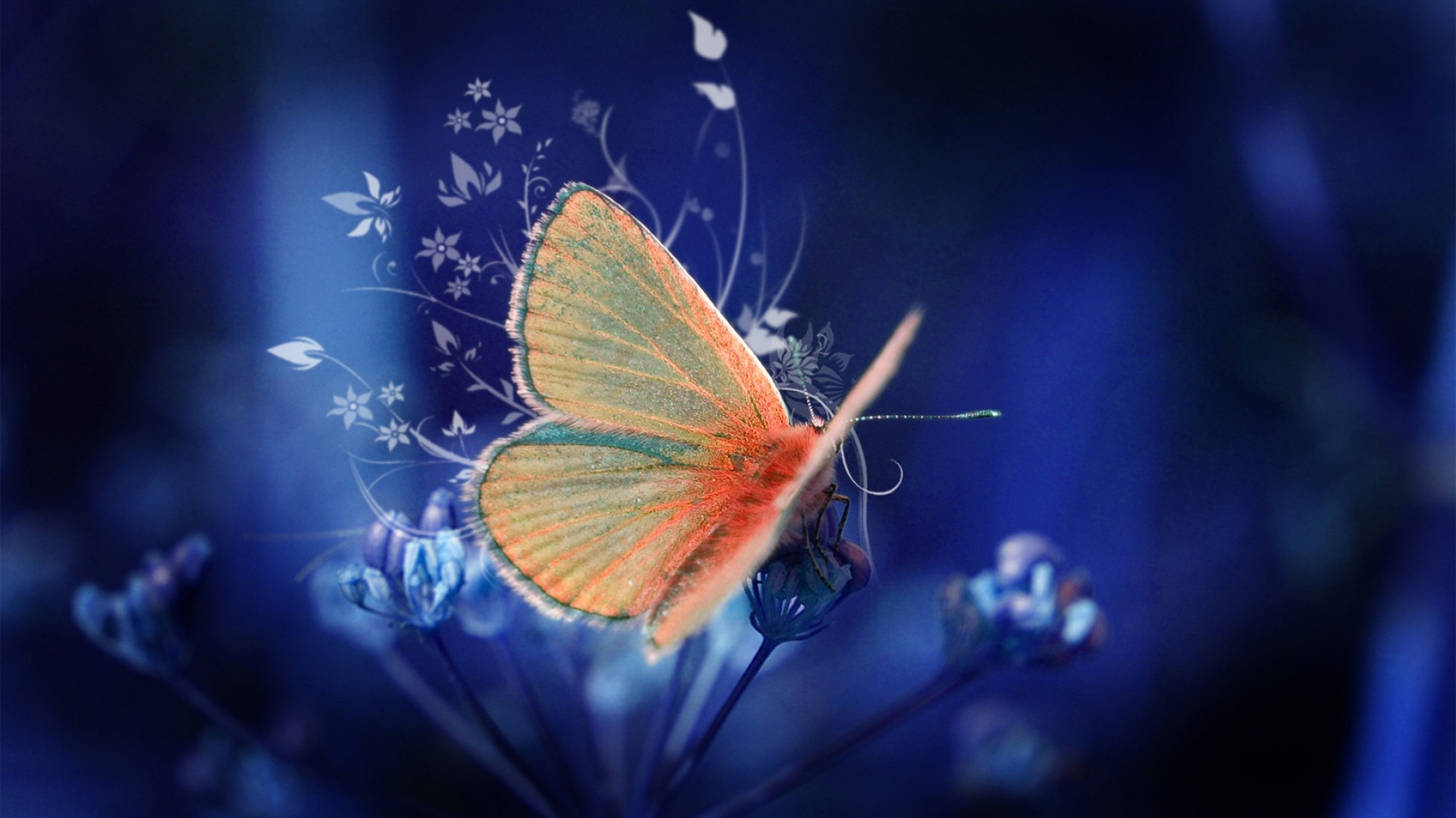 High definition Blue Butterfly wallpapers Butterfly Wallpapers 1920x1080