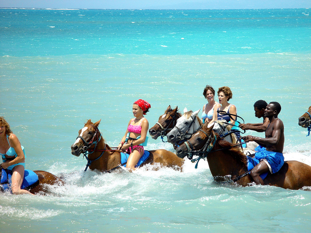 yorkshire rose images Horseback Riding In Jamaica HD wallpaper and 1024x768