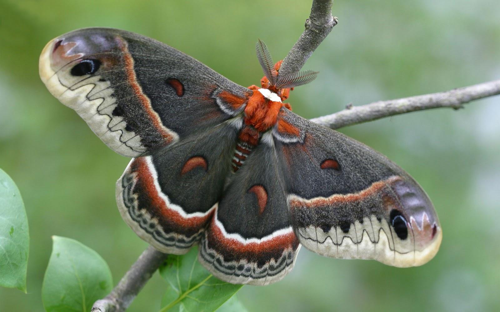 butterfly sitting on a branch butterflies wallpapers backgroundsjpg 1600x1000