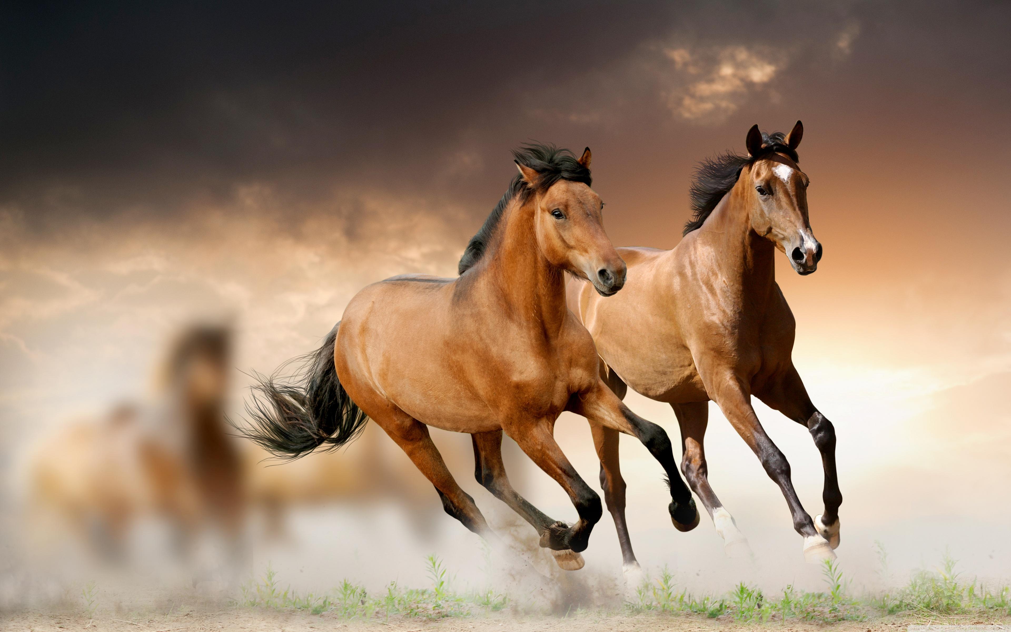 Horses Running 4K HD Desktop Wallpaper for 4K Ultra HD TV 3840x2400
