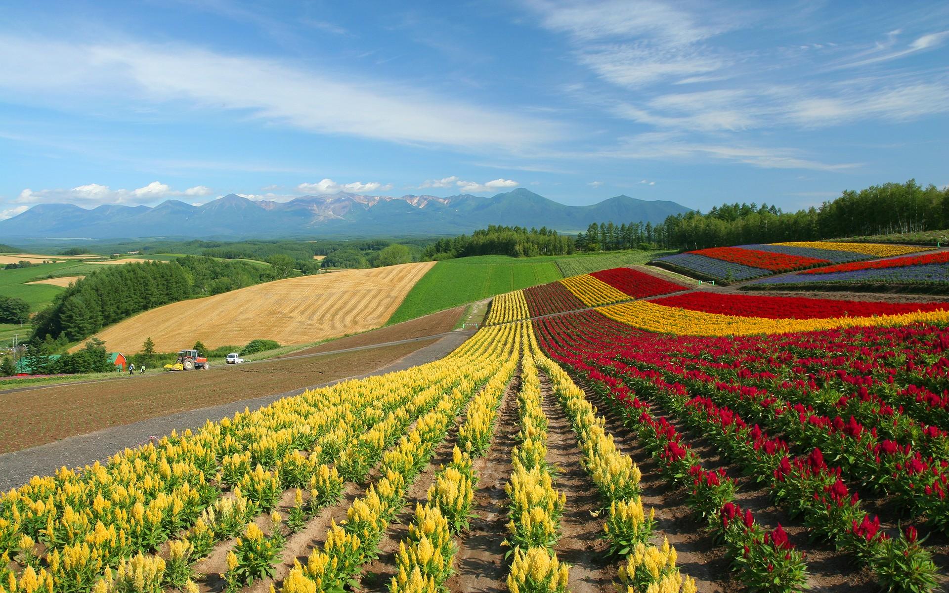 46 country scenery wallpaper on wallpapersafari - Open field wallpaper ...
