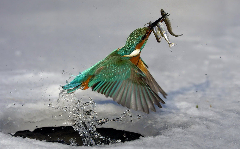 Bird Hunting For Fish 1440x900 1440x900