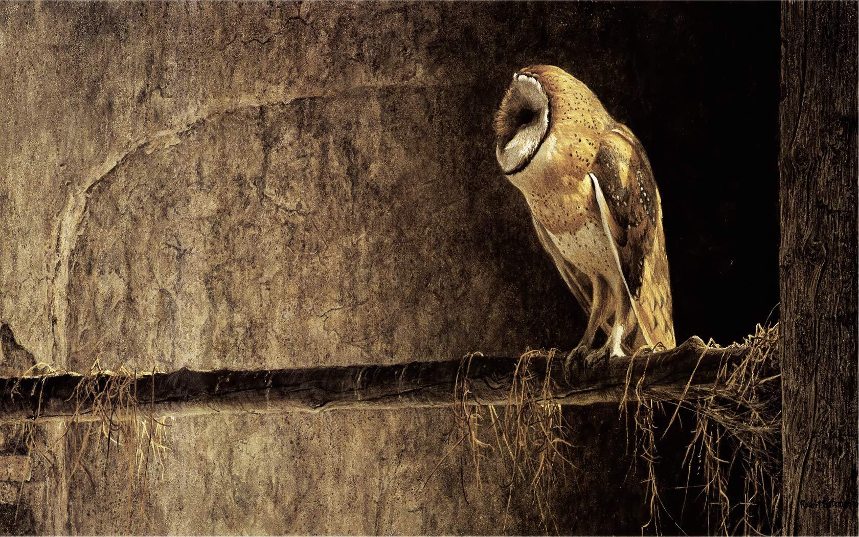 owl desktop wallpaper categories fun wallpaper 1680x1050