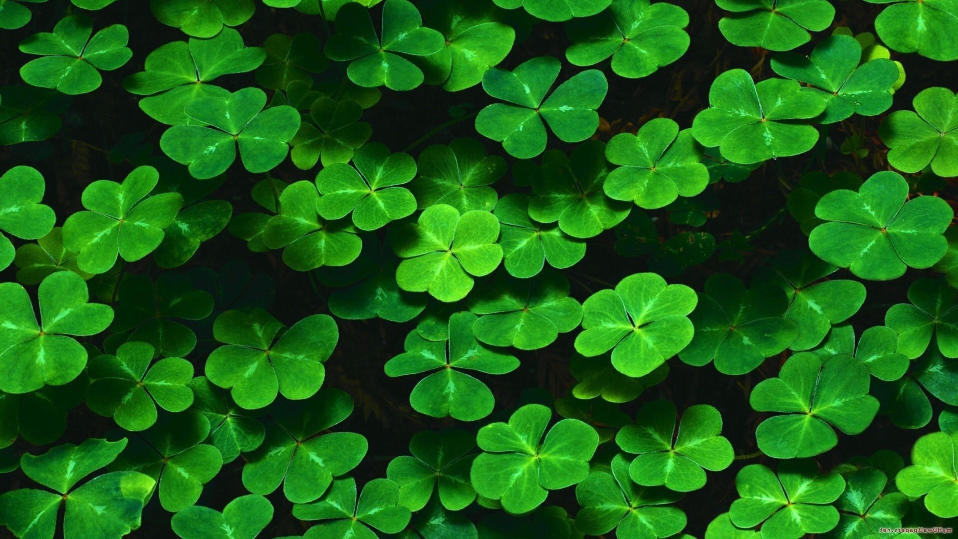 nature, Green, Leaves, Plants, Shamrock, Clovers, Pattern ...