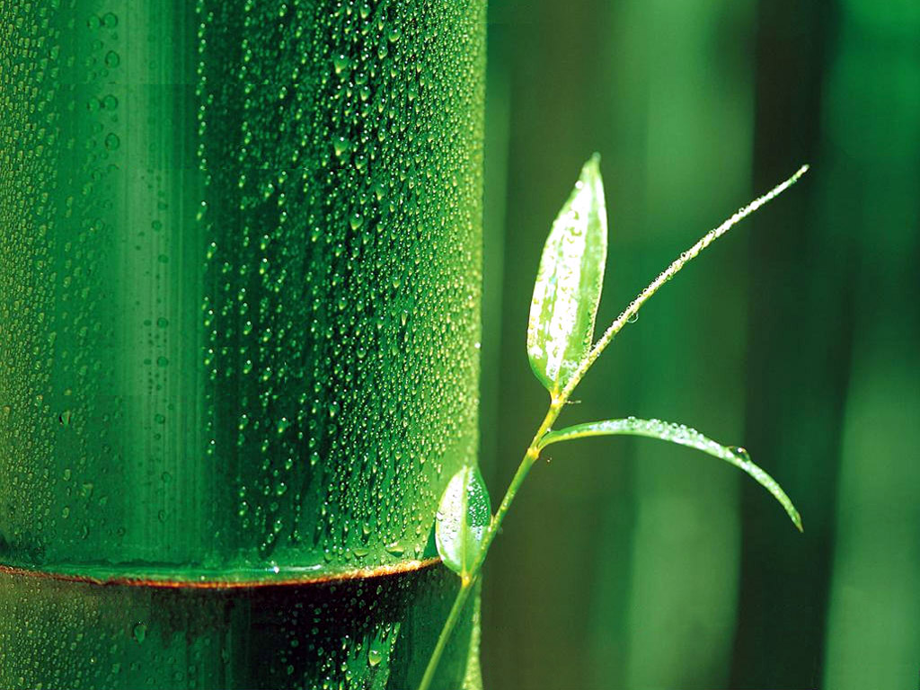 Bamboo Leaf Wallpaper   Bamboo Leaves Wallpaper 1024x768