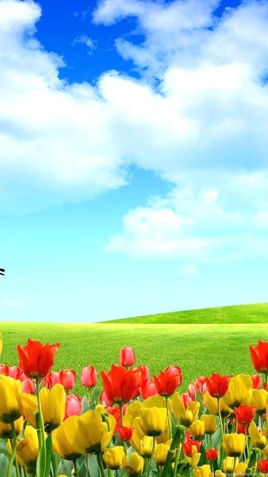 Beautiful Nature Wallpaper For Mobile Hd Wallpapers   Full Screen 540x960
