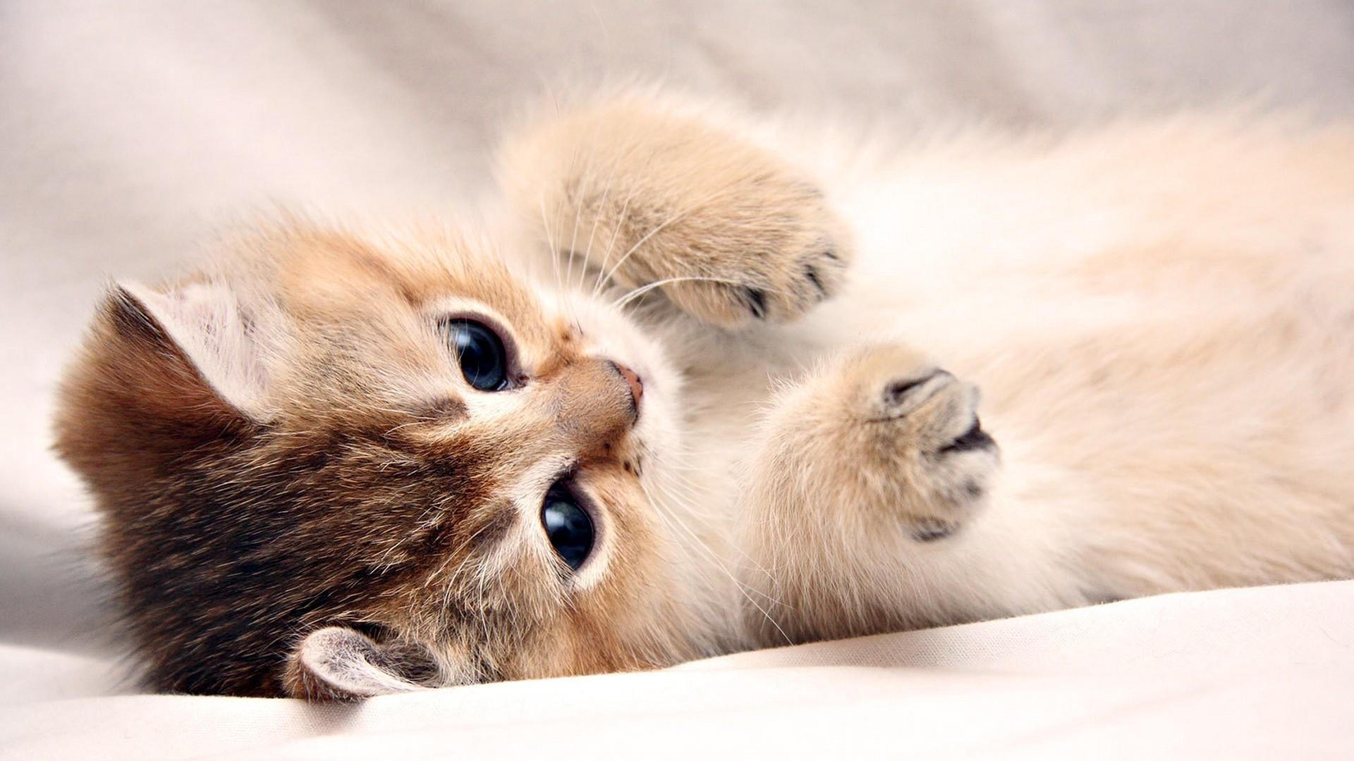 Kitten Desktop Backgrounds   Wallpaper High Definition High Quality 1920x1080