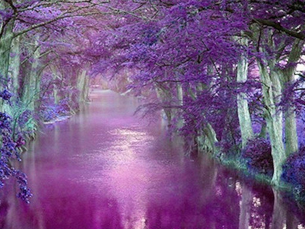 Beautiful Purple Backgrounds Beautiful Purple Wallpaper 1024x768