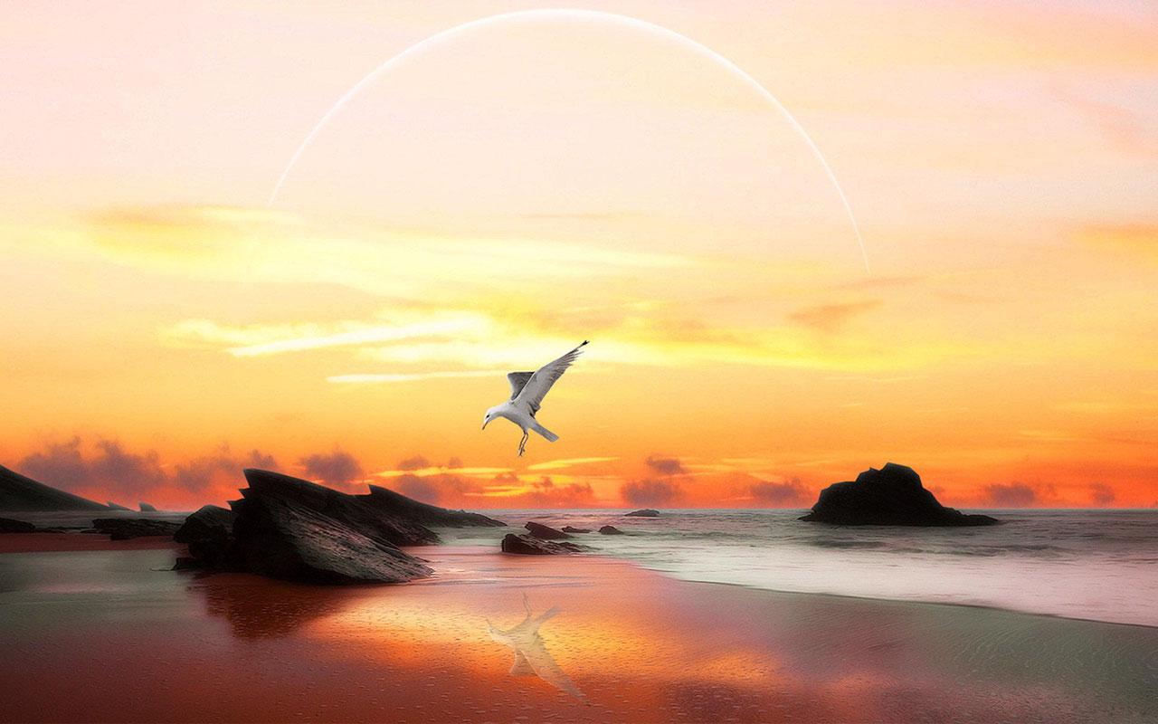 Animal WallpapersFreedom of flying seagulls HD desktop wallpaper 4 1280x800