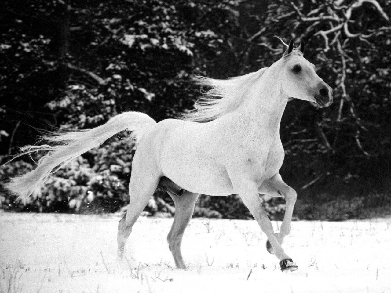 Winter Chill   Horses Wallpaper 17144249 1280x960