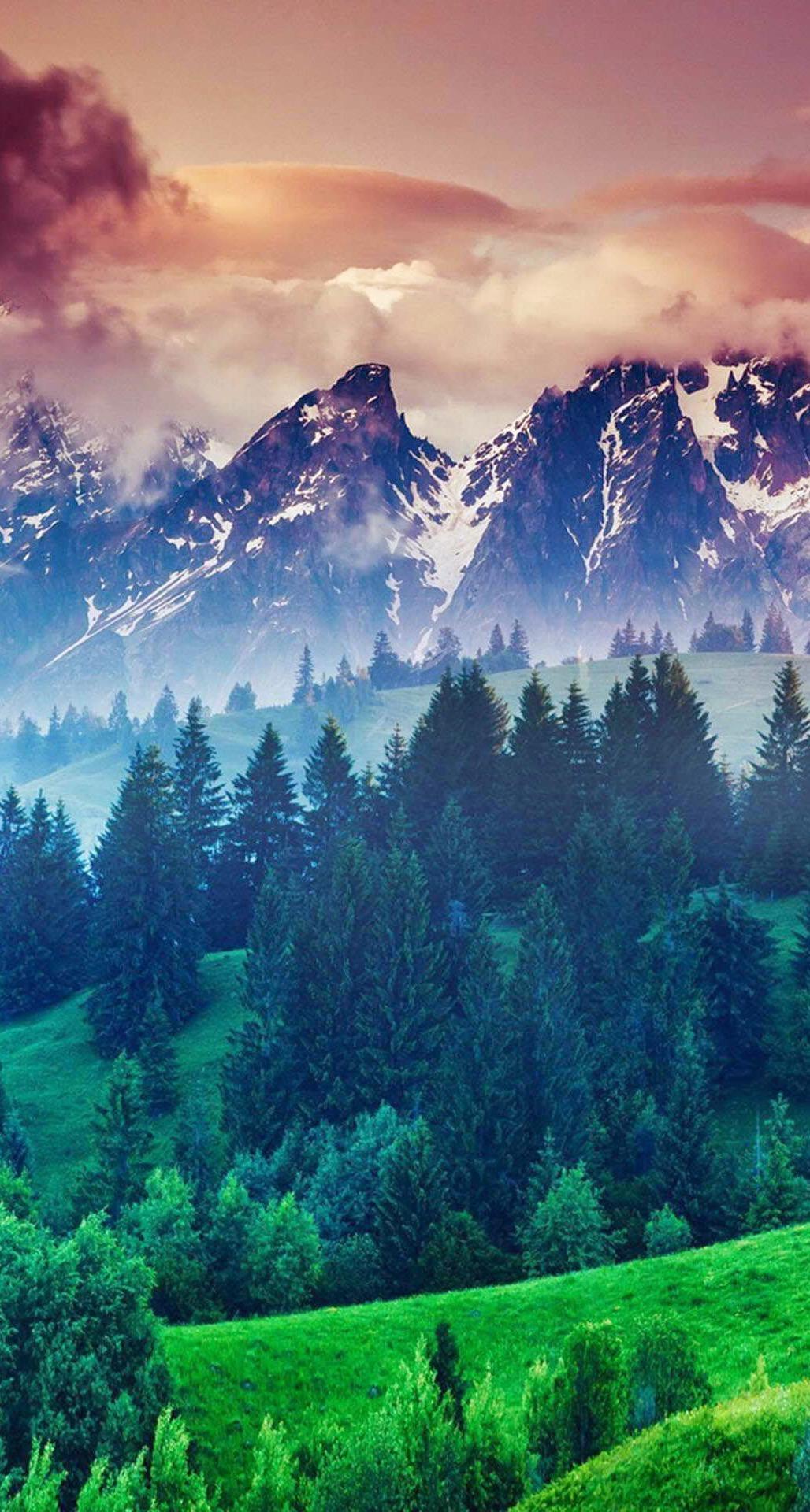 50+ iPhone 6 Wallpaper HD Forest on WallpaperSafari