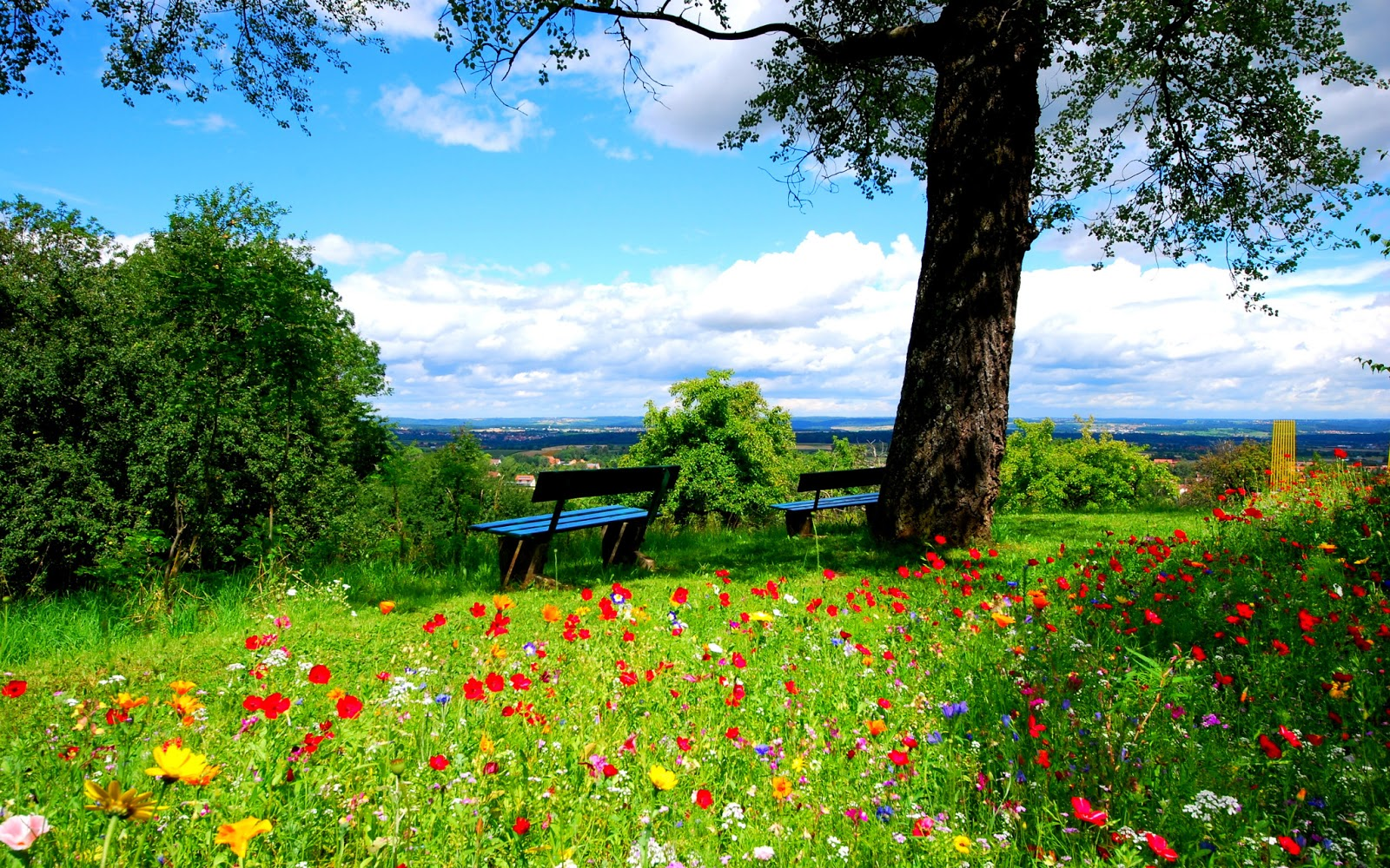 Spring Wallpapers HD HD Wallpapers   Blog 1600x1000