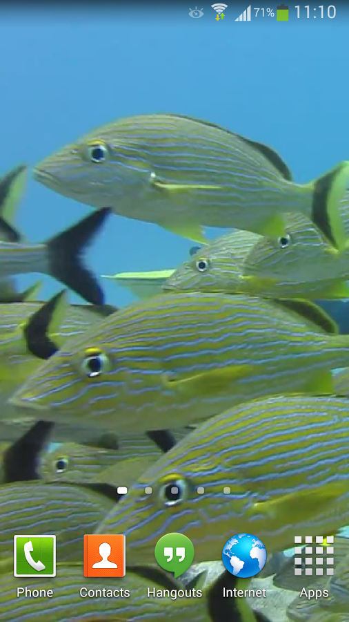 Tropical Fish Underwater Live2   Android Apps on Google Play 506x900