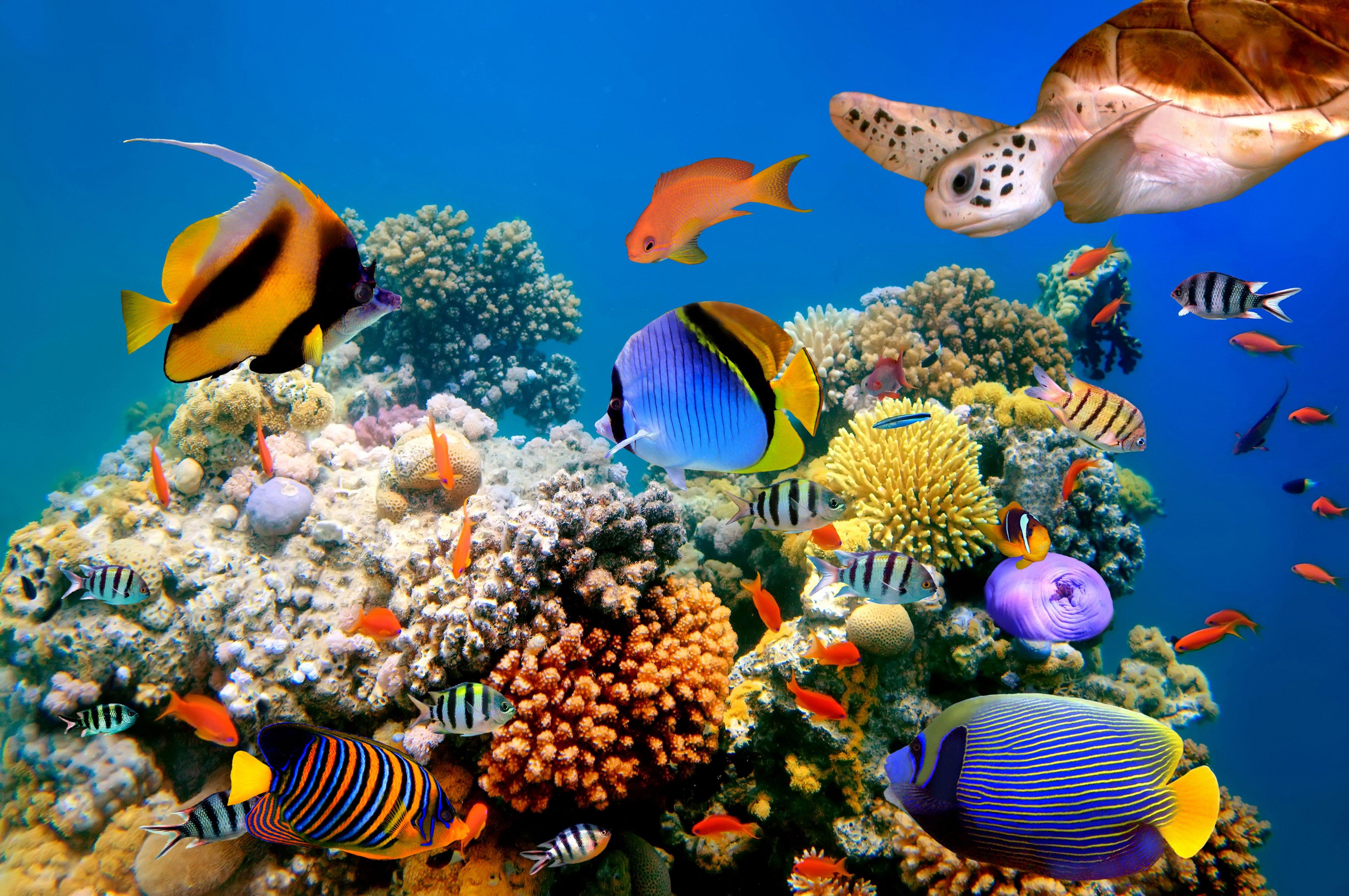 fish turtles corals tropical sea ocean coral reef wallpaper background 4000x2657