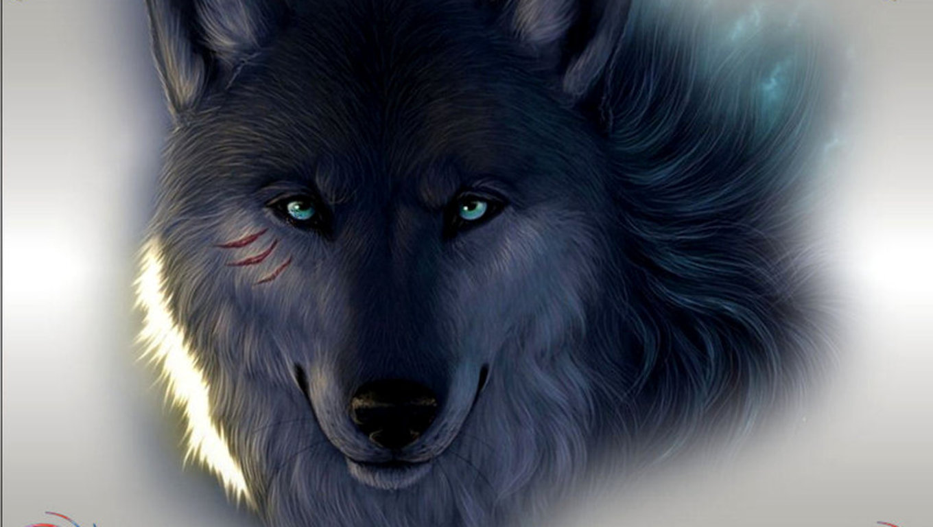 Black Wolf Wallpapers 11219 Hd Wallpapers in Animals   Imagescicom 1360x768
