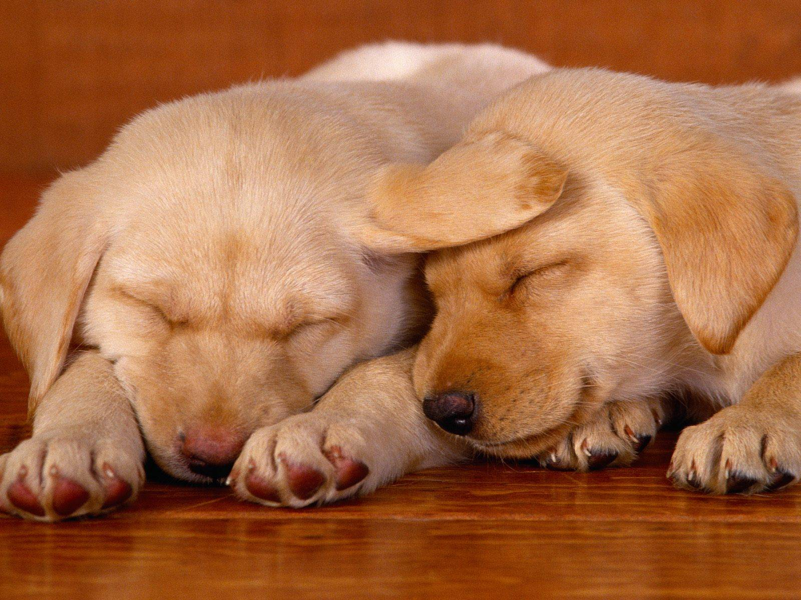 really cute dog   Dogs Wallpaper 1600x1200